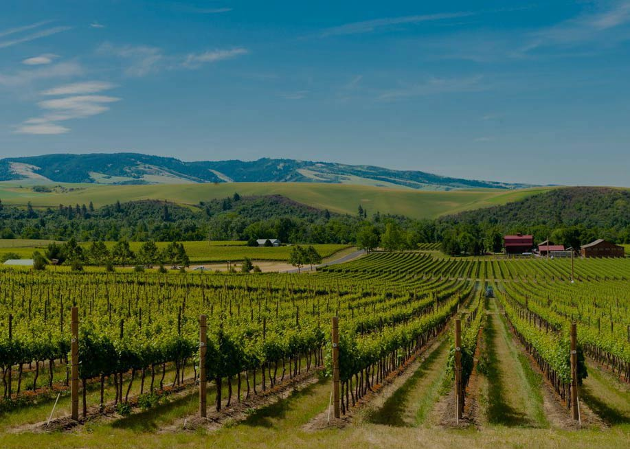 images/slideshow/wallawalla_vineyard.jpg